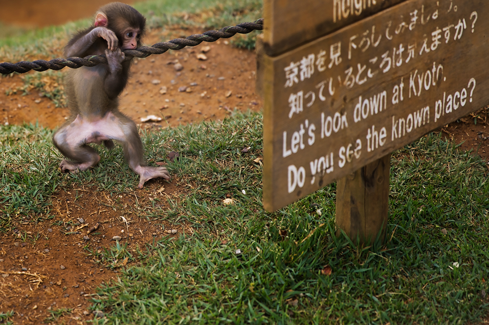 Monkey Park in Kyoto