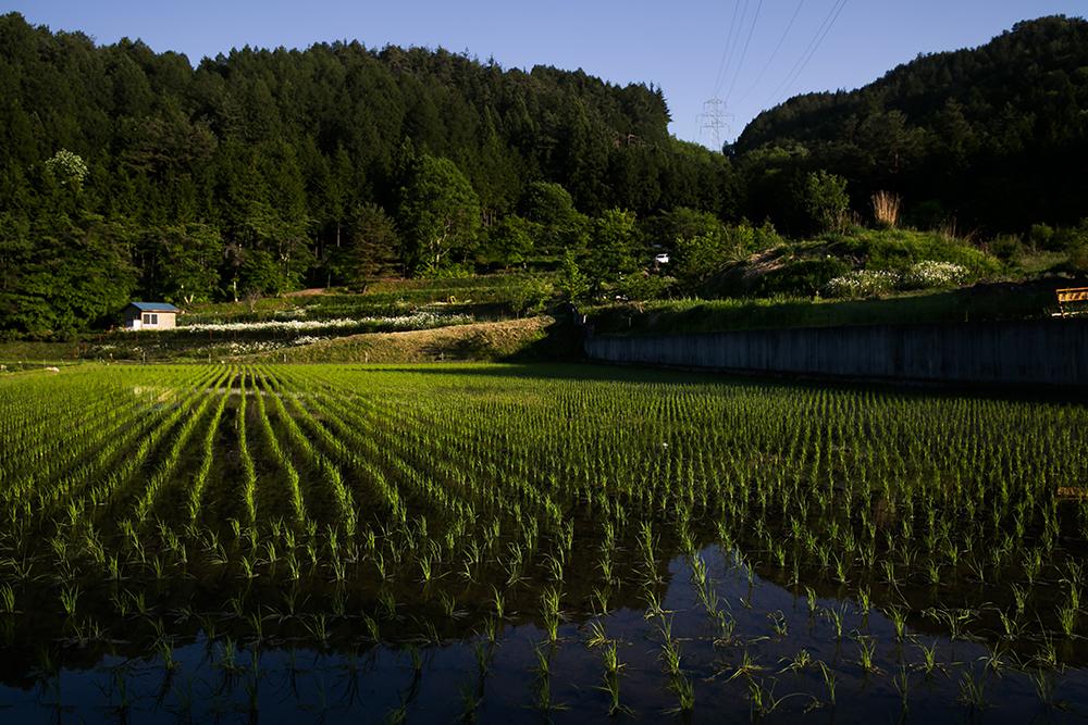 Rice paddies everywhere. Great for snakes in Takayama.