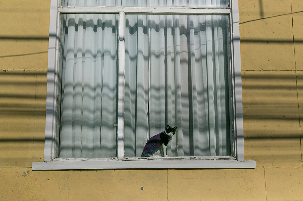 Cat in a cardigan, Punta Arenas, Chile.