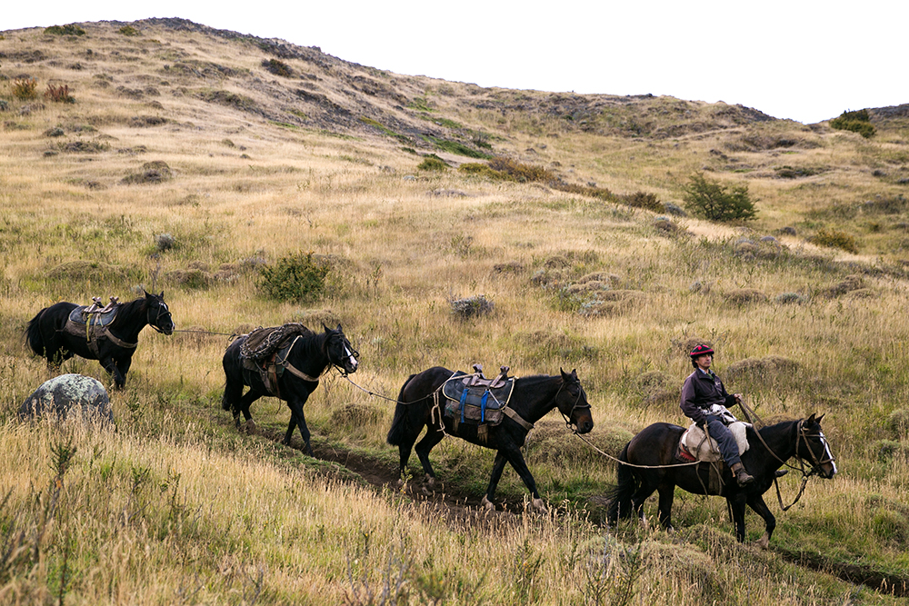 A gaucho and his horses in Torres del Paine, Chile.