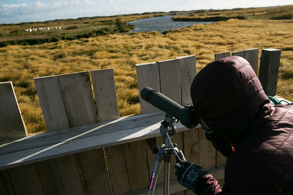 Thankfully they set up a telescope for us to get a closer look at the beautiful king penguins on Tierra del Fuego, Chile.