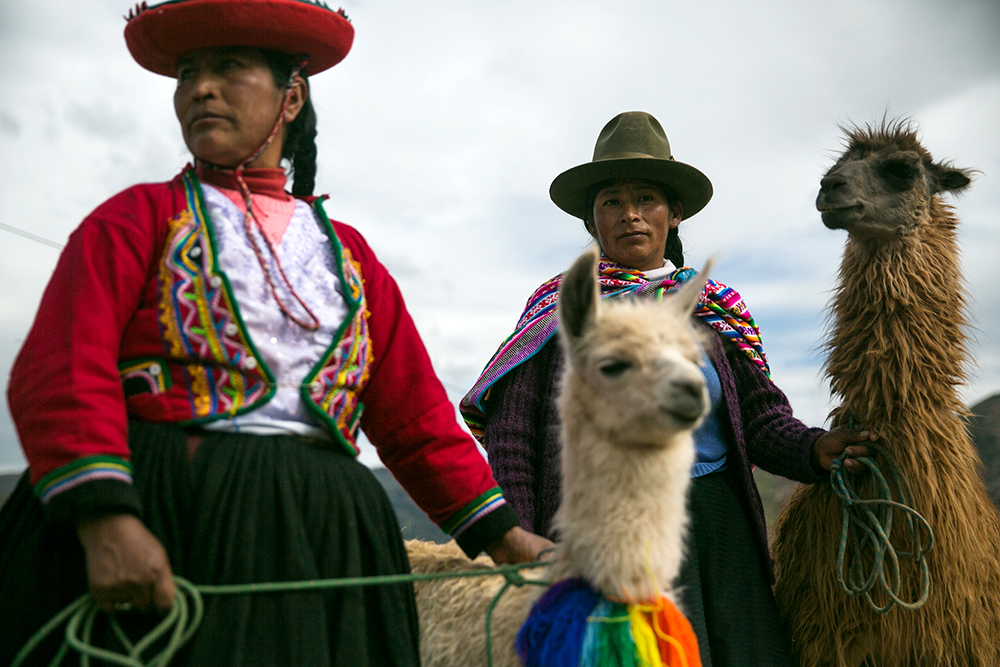 Ladies and llamas, for tourists in Cusco, Peru.
