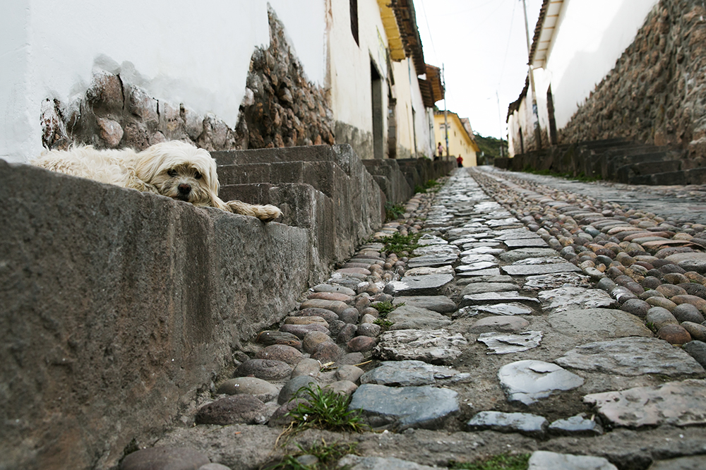 A dog rests on the sidewalk in Cusco, Peru.
