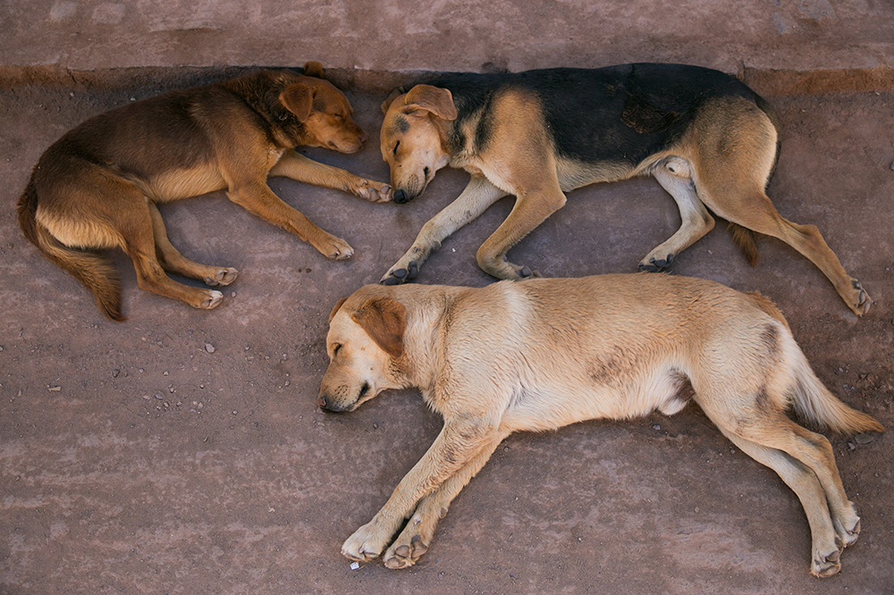 Siesta in San Pedro de Atacama, Chile. So many sleeping dogs in town.