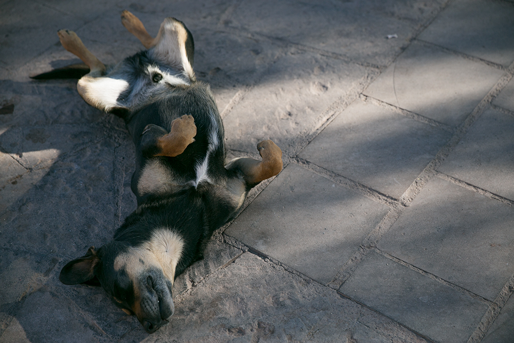 Another sleeping dog in San Pedro de Atacama, Chile.