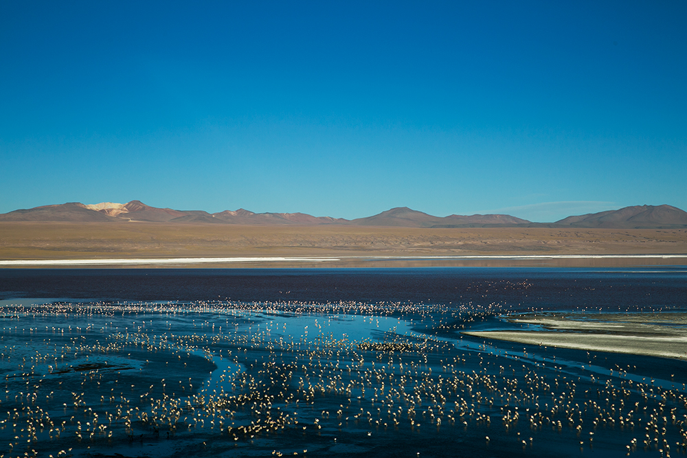 Flamingos, hundreds if not thousands of them, fill Laguna Colorada on the way to Uyuni, Bolivia.