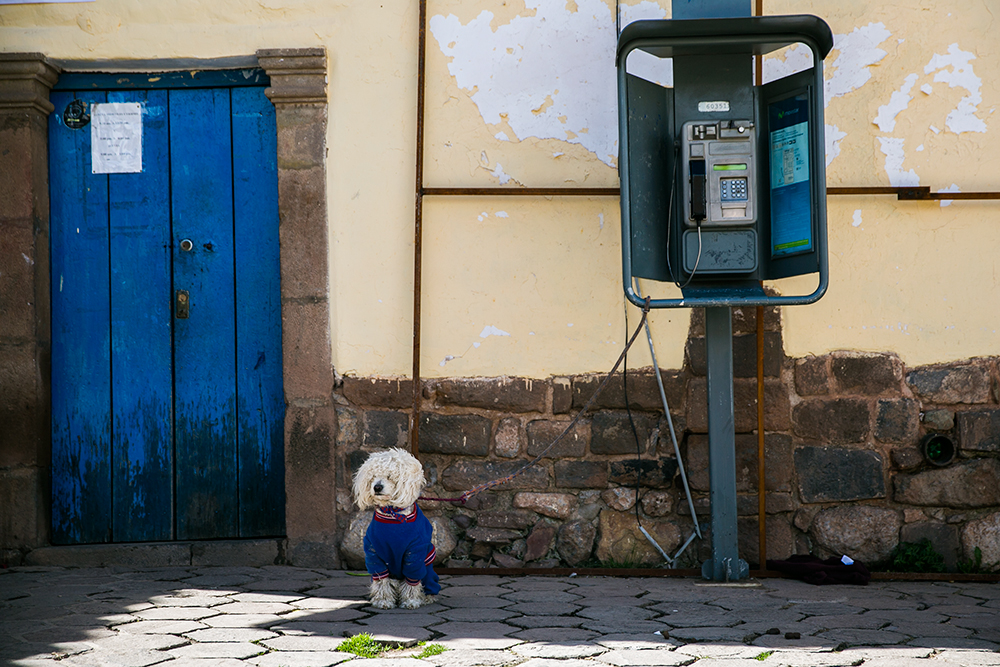 A dog in a sweater waits while tied to a phone booth in Cusco, Peru.