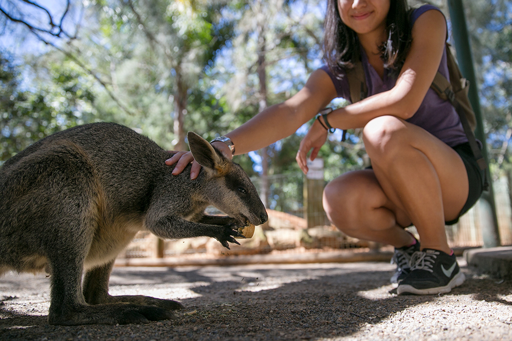 With a wallaby at Featherdale Wildlife Park outside Sydney, Australia (Photo credit: Mark Johnston)